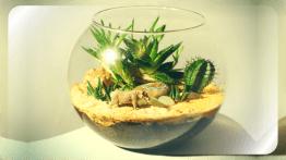 Флорариум в круглой стеклянной вазе
